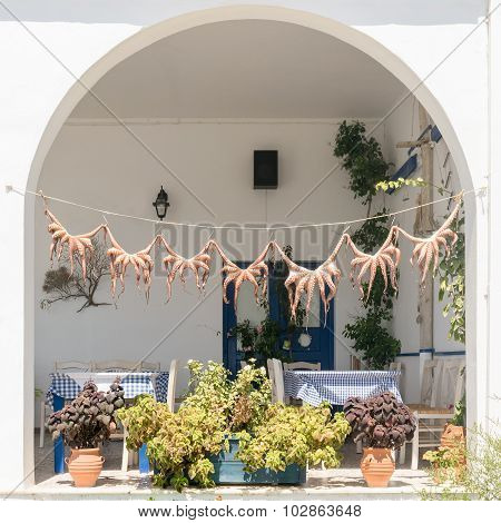 Traditional Greek food octopus drying in the sun.