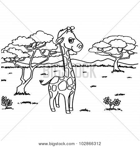 Giraffe Coloring Pages vector