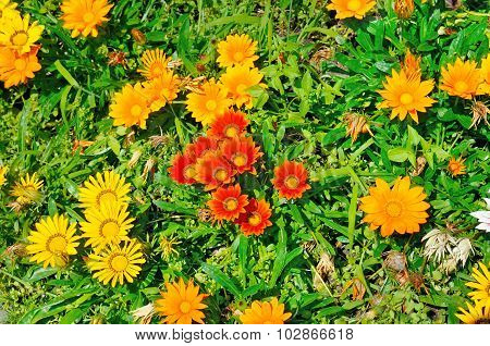 Beautiful Background Of Garden Flowers