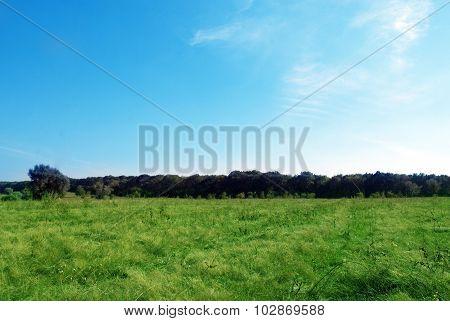 Field Trees