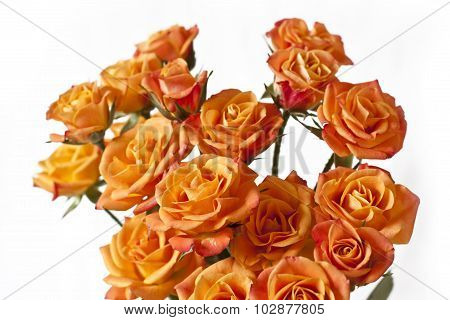 A bouquet of tender tea roses on white background