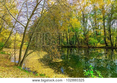 Autumn Landscape With River Covered Fallen Foliage