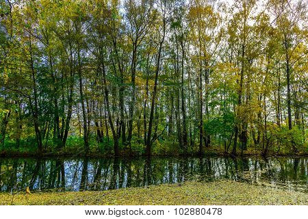 Autumn Landscape With High Trees At Lake Covered Fallen Leaves
