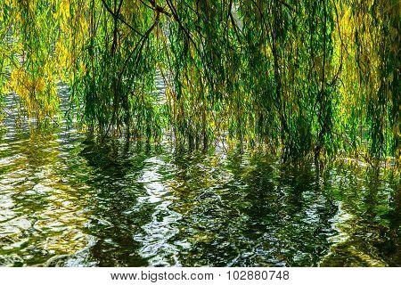 Willow Branch Under Lake In Autumn