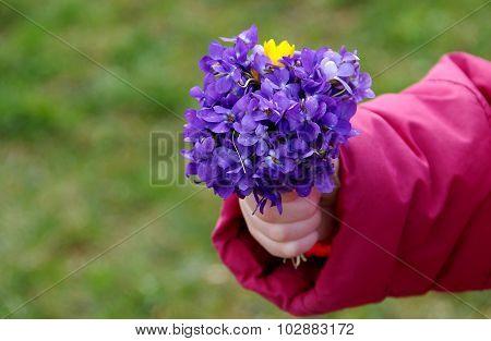 Posy Of Flowers Viola Odorata