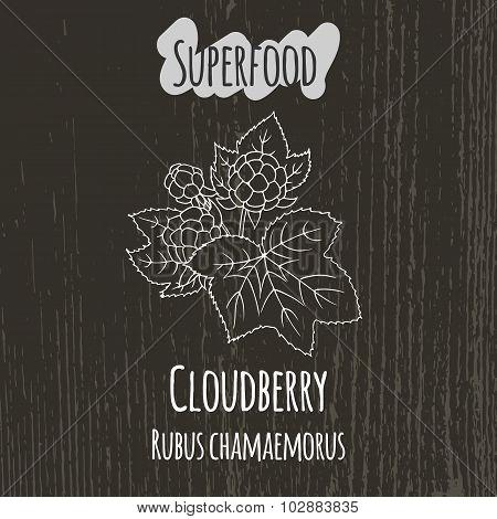 Hand drawing illustration of cloudberry. Rubus chamaemorus