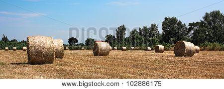 Hay,bale,field,wheat,italy
