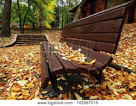 Single Wooden Bench In Autumn Park With Colorful Leaves On The Background.