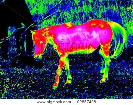 Infrared Foal Pony Horse