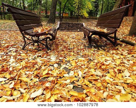 Two Alone Wooden Benches In Autumn Park With Colorful Leaves On The Background.