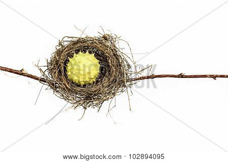Conceptual Bird Nest.
