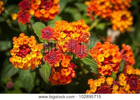 Tropical Flowers, Andalusia, Spain