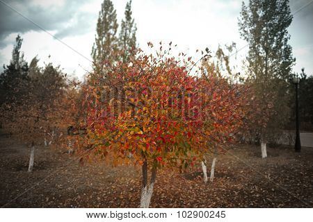 Autumn Tree On A Cloudy Day