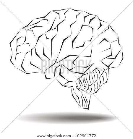 Angular Geometric Representation Of The Human Brain