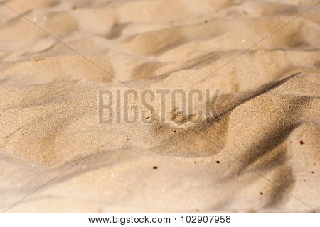 Yellow sand texture with small pieces of wood in Yurmala, Latvia