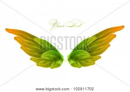 vector bird wings