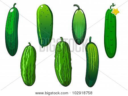 Fresh prickly green cucumber vegetables