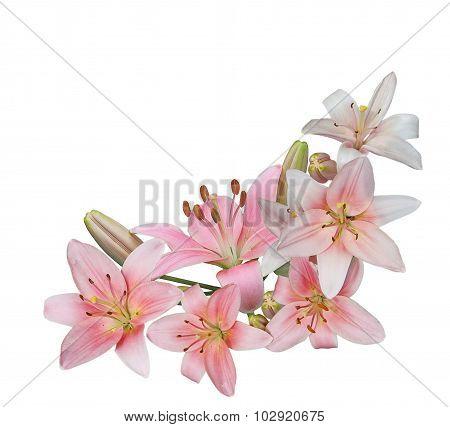 Pink Lily Bundle