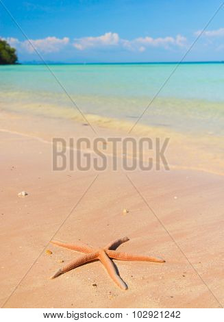 Fallen Star Sea Starlet
