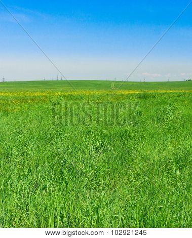 Grass Land Field Landscape