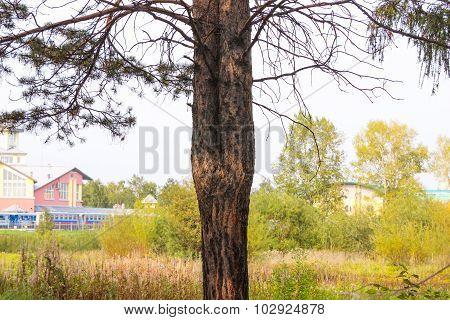 Unusual Tree In Park