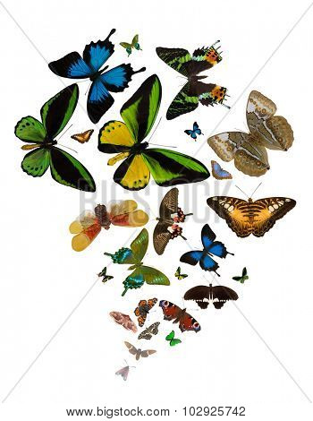 large group of bright color butterflies isolated on white background