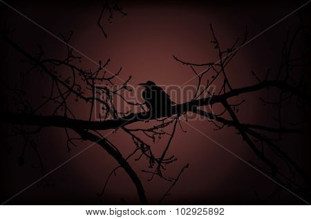 Crow On Branch At Night