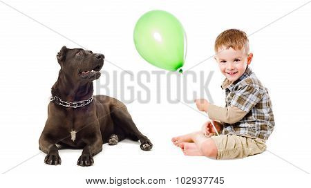 Boy and dog Staffordshire terrier playing balloon