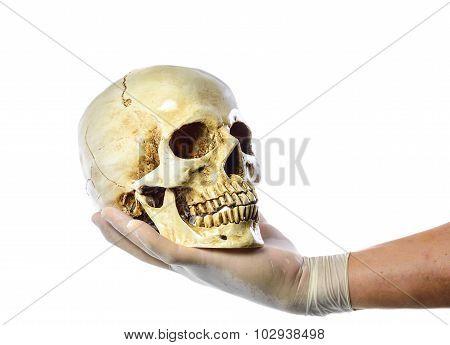 Hand Holding Human Skull On White Background