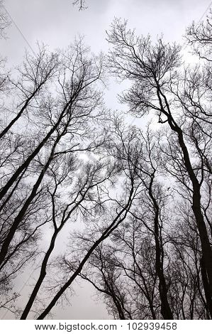 Bare trees of an autumn forest