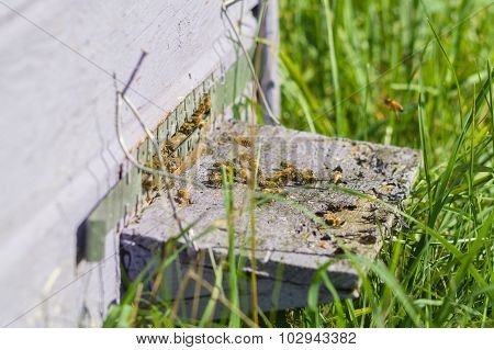 Honey Bees Swarming And Flying Around Their Beehive, Blurred Image