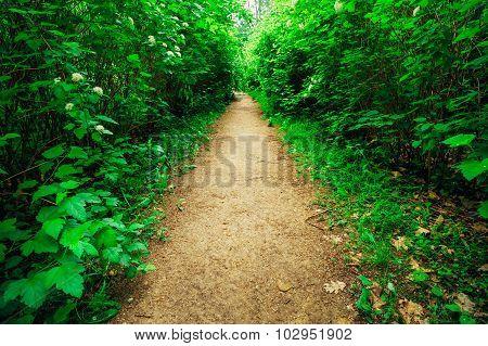 Path With Green Bushes In Garden, Park. Garden design, landscapi