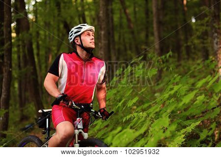 Biker riding on bicycle in wood
