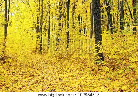 autumn forest  background in a sunny day