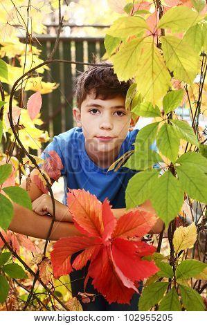 Boy In The Autumn Colored Wild Grape Leafs