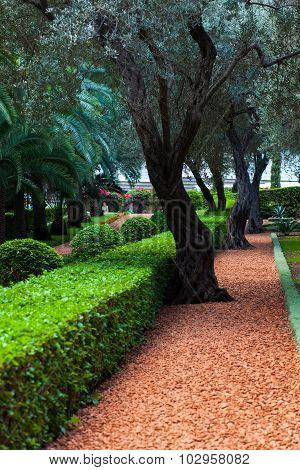 Several flat bushes