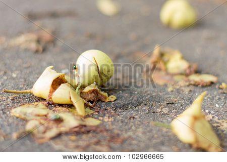 Rotten harvest