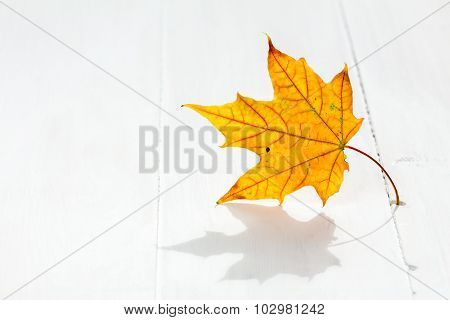 Autumn Leaf On The White Wooden Floor