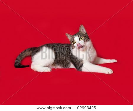 White And Striped Cat Lying On Red