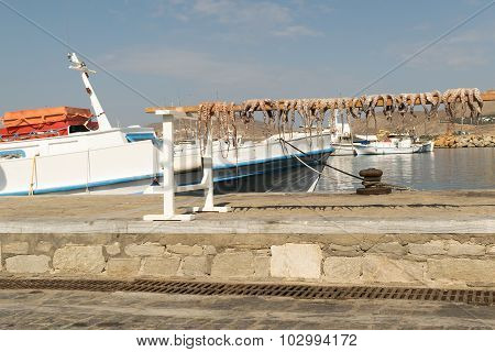 Octopus drying in the sun against the sea at Paros island in Greece.