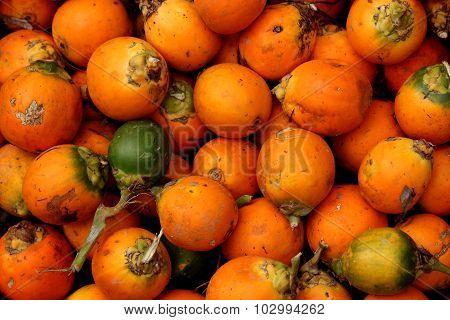 Beetle nut / Arecanut