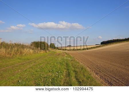 Scenic Grassy Footpath