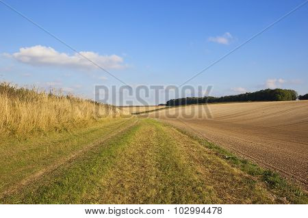 Cultivated Fields In Autumn
