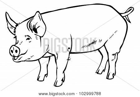 Pig Drawing Hand