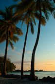 foto of tropical island  - tropical sunset picture hawaii islands palm trees - JPG