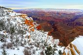 picture of grand canyon  - Evergreen forest at Grand Canyon south rim - JPG
