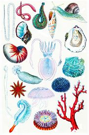 stock photo of aquatic animals  - Aquatic vegetation and form of life - JPG