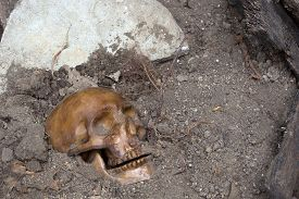 stock photo of tombstone  - Buried human skull with a tombstone in background - JPG