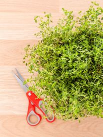 stock photo of clary  - Alternative mediterranean medicinal plants lemon thyme for medicinal and culinary use on wooden background - JPG