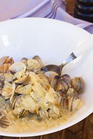 pic of shell-fishes  - Clam shell fish in big white plate close up - JPG